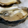 Ah, Shucks: A quest for Atlanta's best oysters on the half shell